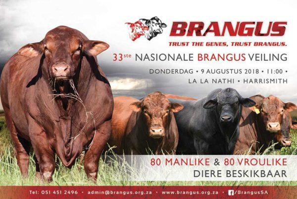 Brangus-Veeplaas-Halfblad3